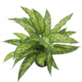 NWTURF ARTIFICIAL AGLAONEMA BUSH 38CM WITH 30 REAL TOUCH LEAVES COMPLETE IN BLACK BASIC POT