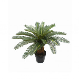 CYCAD PALM 70CM WITH 24 LEAVES