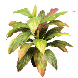 NWTURF ARTIFICIAL DELUX CORDYLINE PLANT 75CM WITH 24 LEAVES