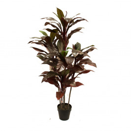 DRACENA PLANT 1.5M WITH 80 LEAVES