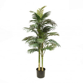 GOLDEN CANE PALM 1.5M
